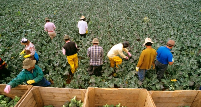 How to Apply for Australian Agriculture or Farming Visa?